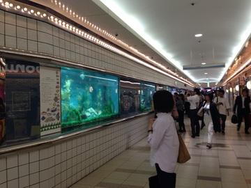280830_aquarium1.jpg
