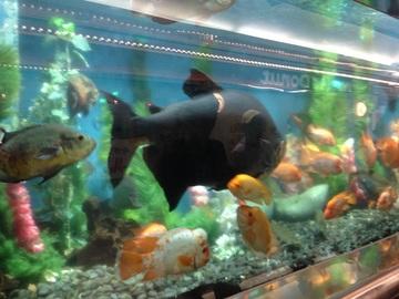 280830_aquarium3.jpg