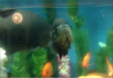 280830_aquarium4.jpg