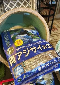 300513_ajisai-no-tsuchi2.jpg