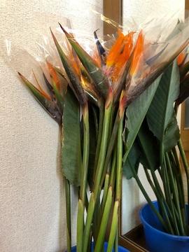 301014_flower1.jpg